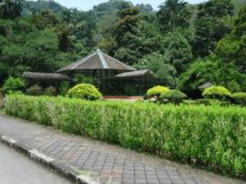 青岛今年将新改建绿地200公顷 启动植物园新址论证