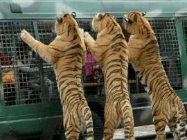 潮州、揭阳都要建野生动物园,两园相距仅38公里