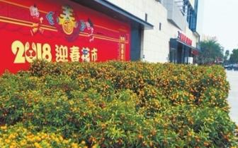 珠海新增一处迎春花市,居民可在家门口买年桔啦