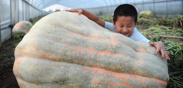 560斤巨型南瓜亮相 引市民围观