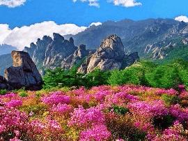 青岛旅游惠民月11月开启 万张景区门票免费抢