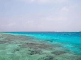 港媒称西沙群岛越来越受内地游客欢迎:海水很清澈