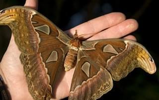 重口味盘点世界最大昆虫!令人望而生畏