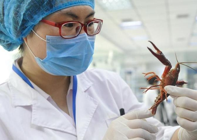 西安三份小龙虾样品 两份检出寄生虫