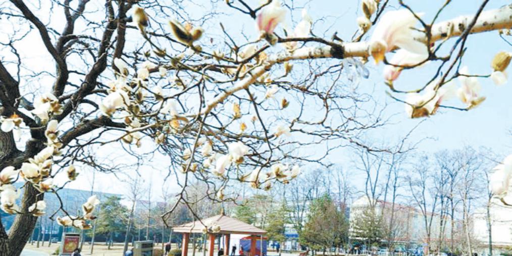 长治:阳春三月花烂漫 市民纷纷外出赏花