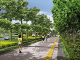 岛城中心城区道路有条件区域将建自行车道