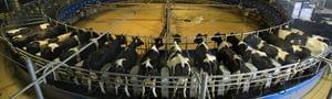 现代牧业巨亏因与蒙牛相互拖累