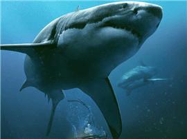 北美高口碑电影《鲨海》定档12月8日 首款预告暗藏深海