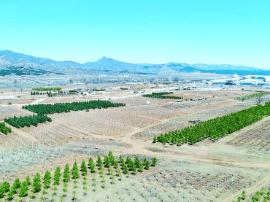 庆祝自治区成立70周年 4大工程绘就生态首府升级版