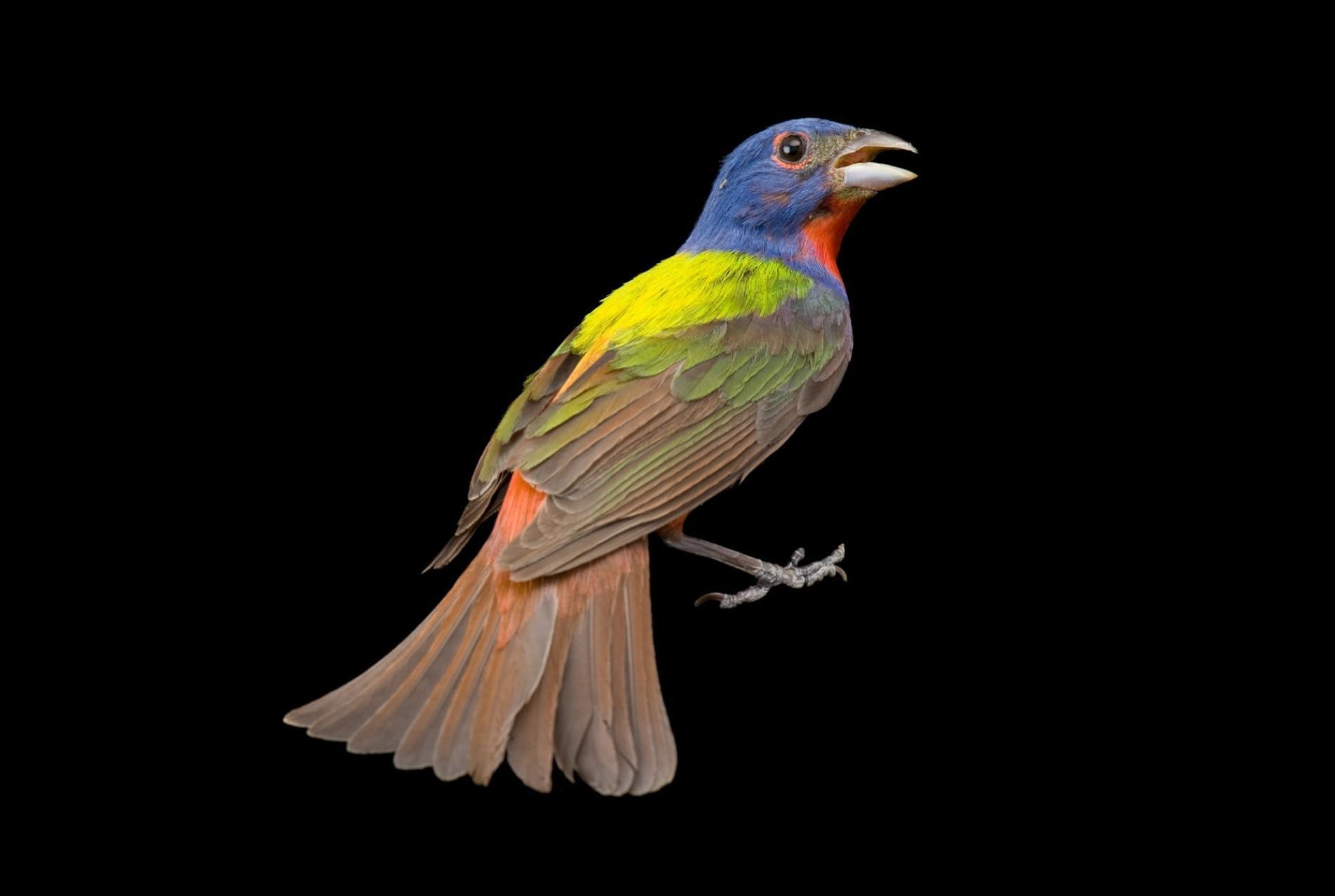 """鸟类是人类的""""灵魂伴侣""""  没它们我们也活不下去"""