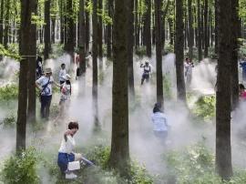 """兴化李中水上森林""""雾森幻境""""纯天然大氧吧"""