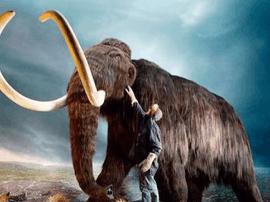 灭绝物种起死回生的真相 不是花钱能解决的问题