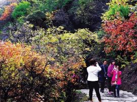 龙山红叶节暨登山健身周在龙山脚下启动