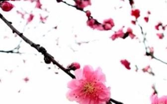 """""""花开盛世 湘韵乡情""""湘乡市第二届桃花节开幕"""