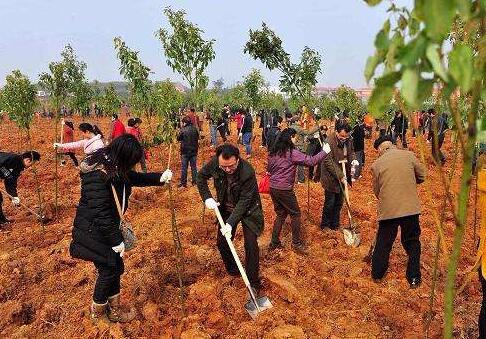 植树造林19.98万亩,荆州你还想要怎么美?