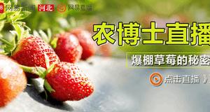 农博士直播:爆棚草莓的秘密