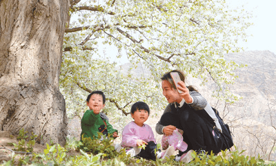宁夏长滩村:百年梨树 绽放迎客