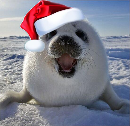Small seals