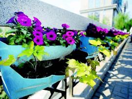 南沙河新建路段鲜花装饰营造绿色生态环境