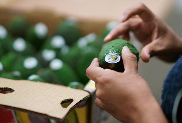 """牛油果成全球贸易""""绿色黄金"""" 生产商瞄准中国市场"""