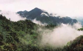 """到韶关,来一场滋养灵魂的""""森林之旅"""""""