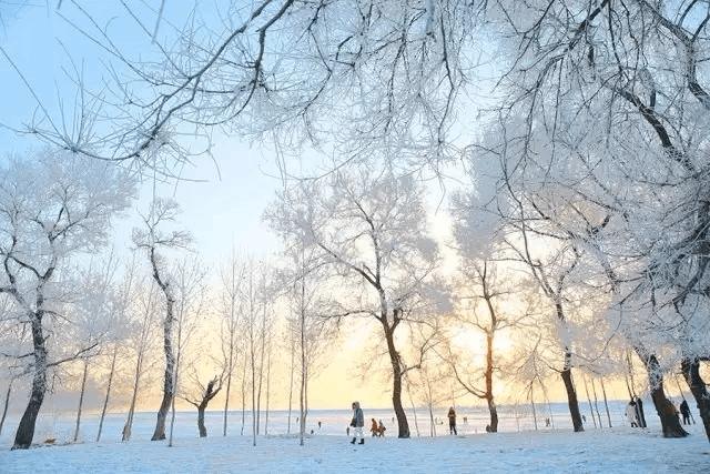 今年冬天去长白山不要钱?都去东北痛快玩雪吧!