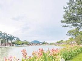 夏之漳州:圆山脚下碧波荡漾 南山湖畔鲜花盛开