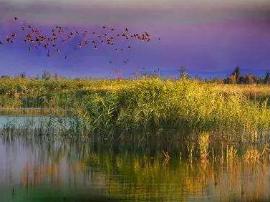 新疆新增5处国家级湿地公园 共52处