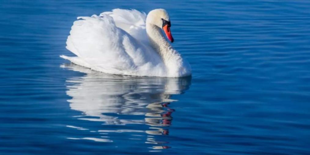美丽新源 | 冰雪童话里的白羽天使