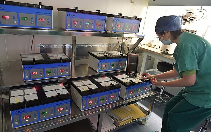 """图为实验室医生将胚胎放入""""生命孵化器""""培养箱中"""