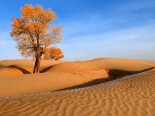 图开沙漠 是你想要去的诗意远方