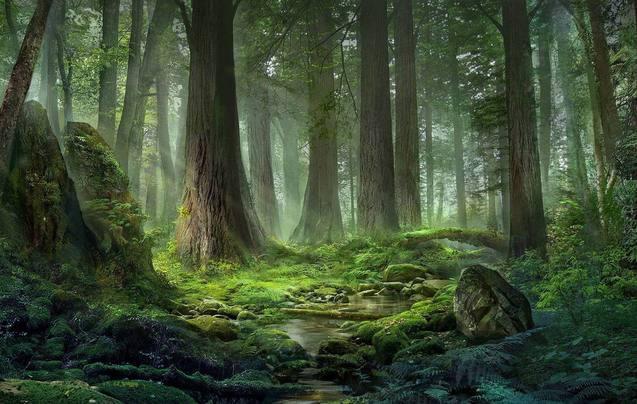上千万买房子住丛林
