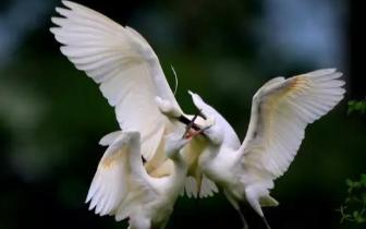 潜江市林业局:人间最美四月天 又是一年观鸟季