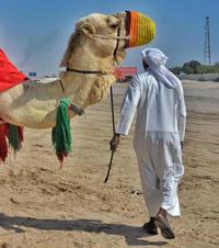 第43期:卡塔尔 穿越一千零一夜
