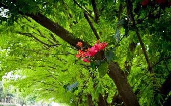 东莞这条美丽的林荫小道,犹如走进电影场景