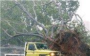 飓风袭澳洲 树木连根被拔