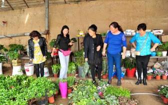 温泉办事处南昌路社区开展花卉栽培技术交流活动