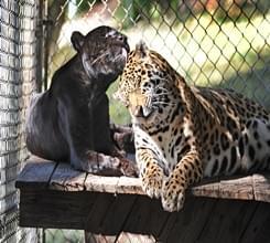 """动物界的""""情人"""""""