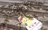 """蟹农四五十亩螃蟹死亡 疑似蟹药帮""""倒忙"""""""
