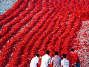 新疆的丰收场面太霸气 张张都是彩色大片!