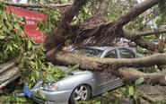 广东珠海大树倒塌砸坏轿车