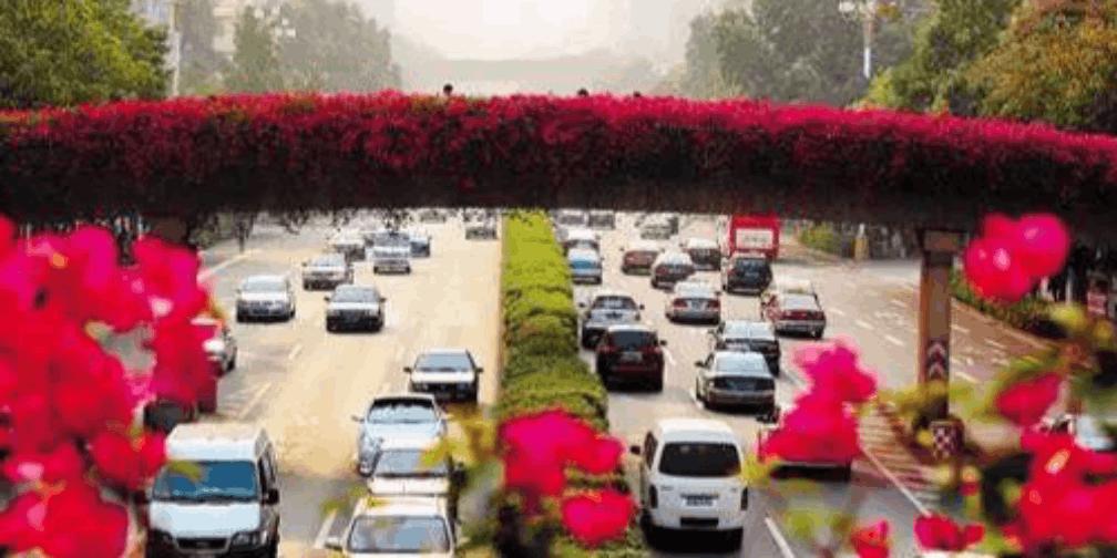 40个赏花点10万株花,广州承包一年四季想看的花!