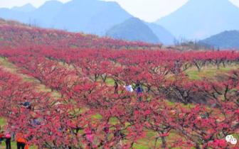 """连州""""旅游+农业"""":力争今年游客数破千万人次"""