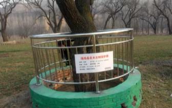"""三门峡市渑池县为198株古树上了""""户口"""""""