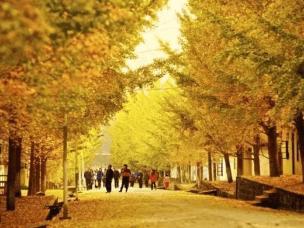 谁说的广东没有秋天?简直美的不可思议了好吗?