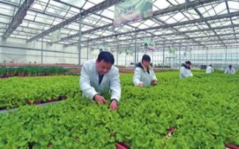 """邯郸一农业科技示范园区引进""""活体蔬菜"""""""
