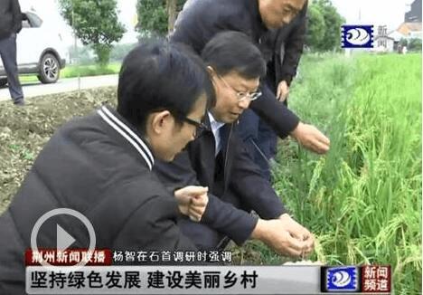 杨智调研石首市基层党建、美丽乡村等工作