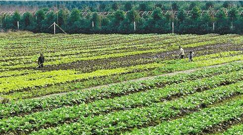 土地流传发展特色生态农业 移民新村打造美丽乡村