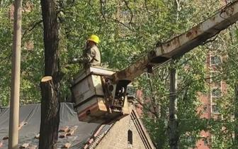 长治:修剪老龄树木 消除安全隐患
