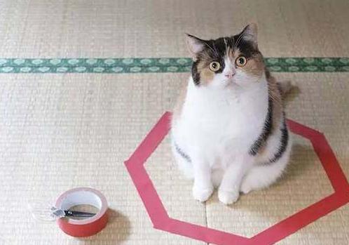 """很多年以后,人们发现这个圈可以玩""""围住神经猫""""(误)"""